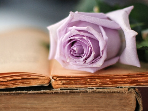 Wallpaper Delicate lilac rose lies on the open book