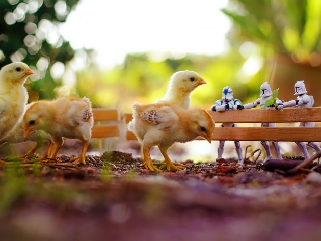 Wallpaper Chickens and stormtroopers