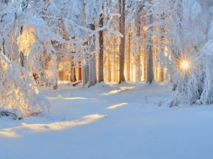 Download Wallpaper Sunset Forest Snow Winter River 1920x1200