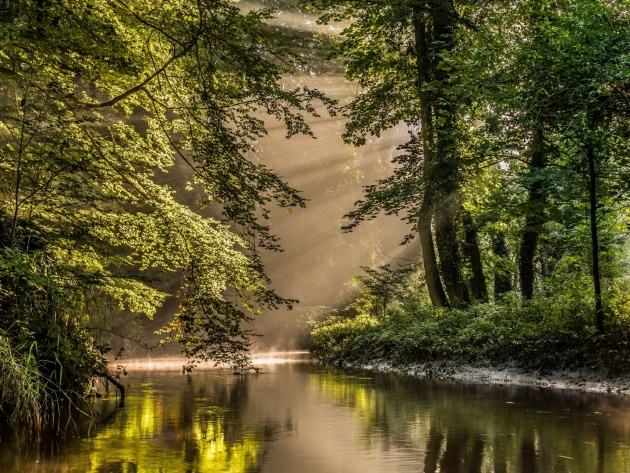 Wallpaper Sunbeams above the forest river
