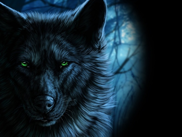 Wallpaper Muzzle of the wolf in the dark