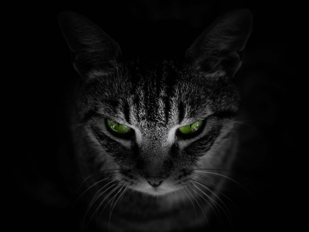 Wallpaper Grey cat with green eyes