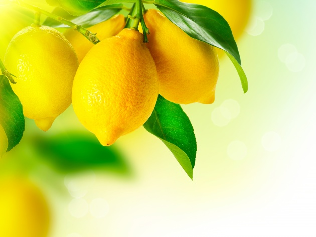 Wallpaper Lemons on branch