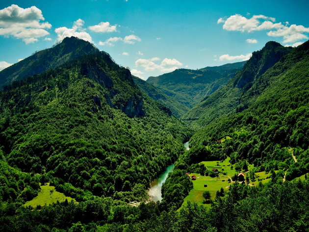 Wallpaper forest, river, mountains, montenegro, the canyon of the tara river, tara