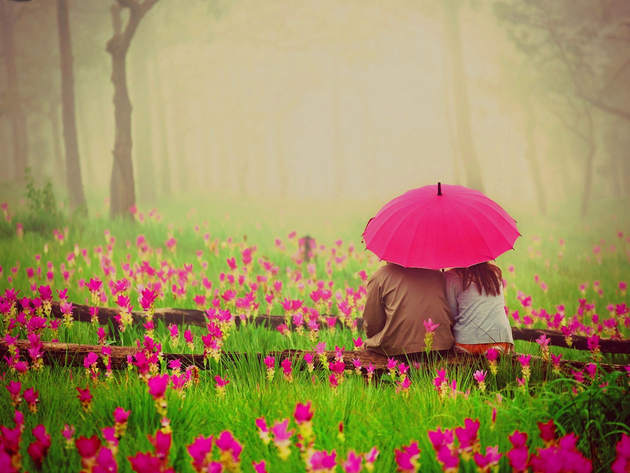 Wallpaper forest, flowers, grass, fog, umbrella, love, park, a couple, meadow, romance