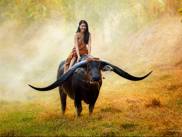 Wallpaper brunette, fog, field, asian, girl, bull, smile, morning