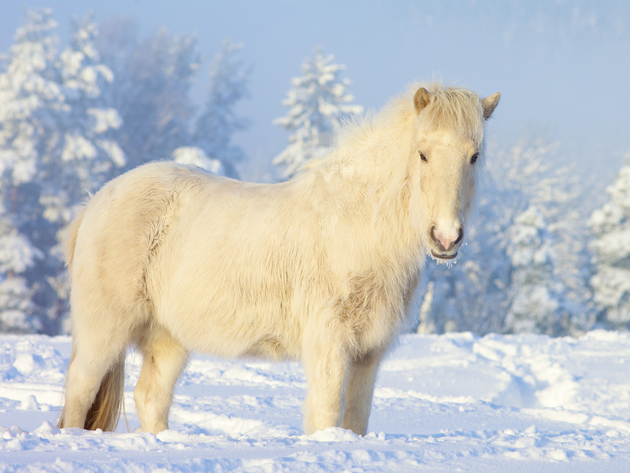 Wallpaper Snow Winter Horse Pony White Photo Wallpaper Desktop