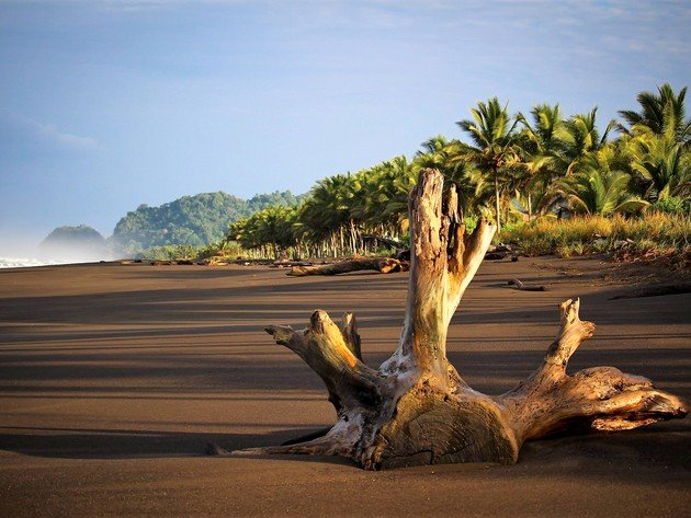 Wallpaper beach, sea, tropics, ocean, costa rica, black sand, snag