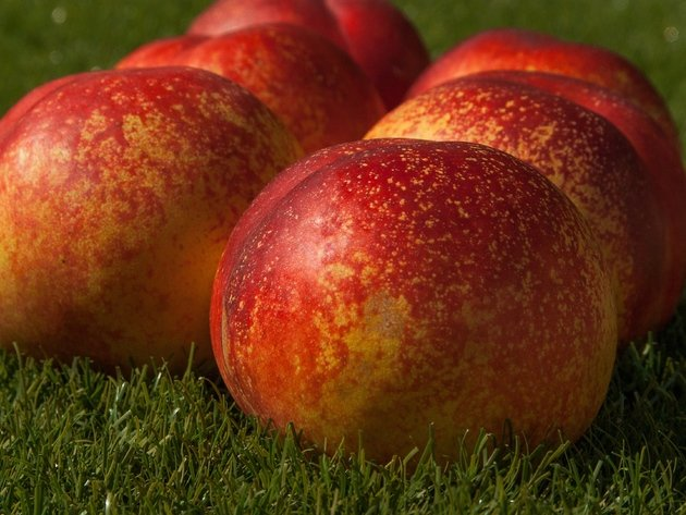 Wallpapers gras, obst, apricot, essen
