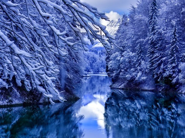 Wallpaper forest, trees, snow, winter, river