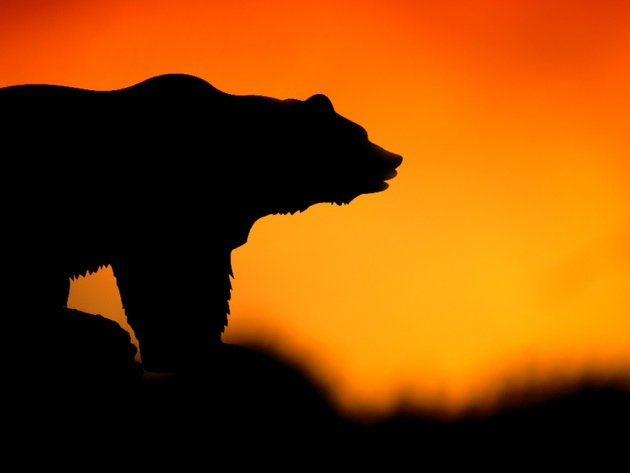 Wallpaper sunset, bear, silhouette