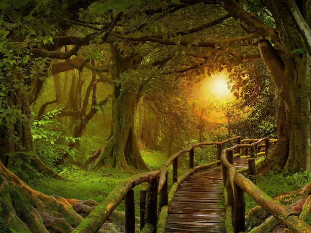 Wallpaper forest, trees, dawn, path, mystical forest