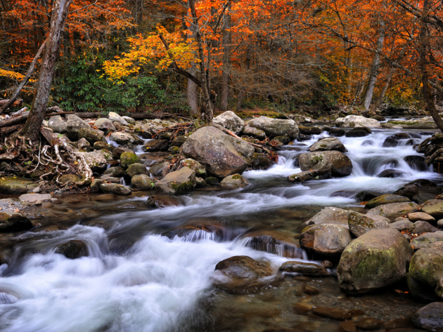 Wallpaper forest, autumn, river, stones, nature