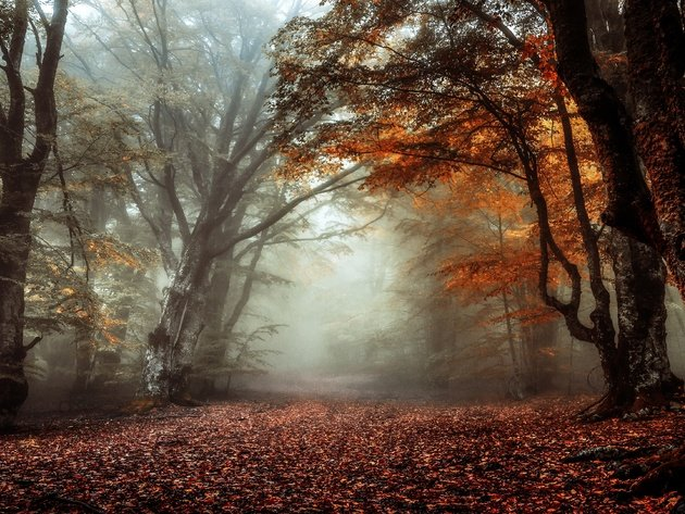 Wallpaper forest, autumn, foliage, trees, fog