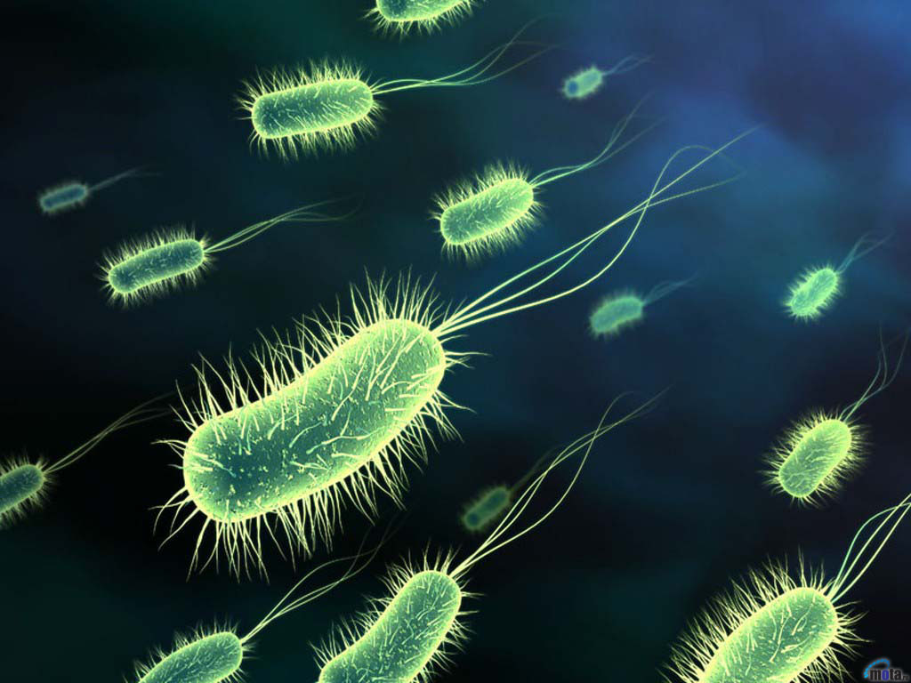 download wallpaper black, 1024x768, bacteria