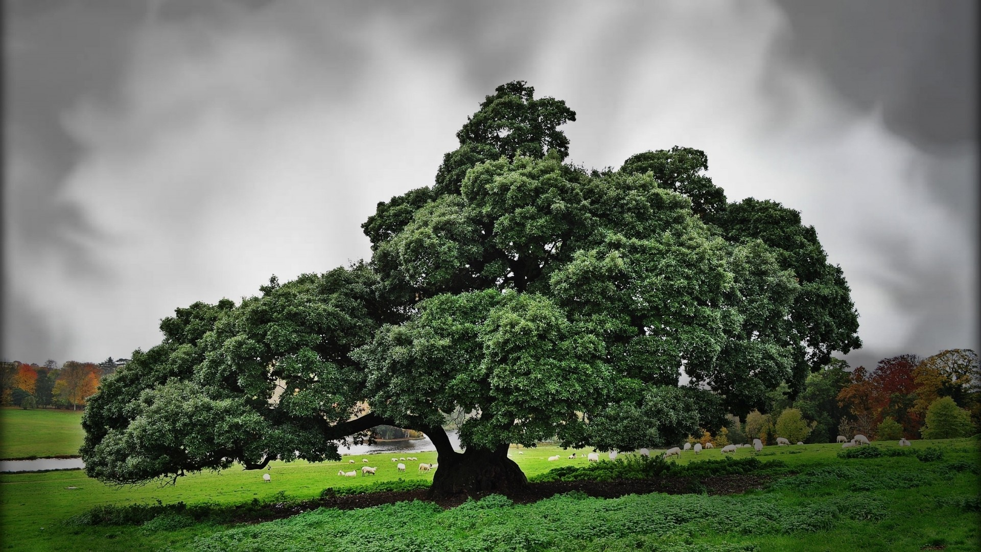 Green old tree is taged in landscape, tree