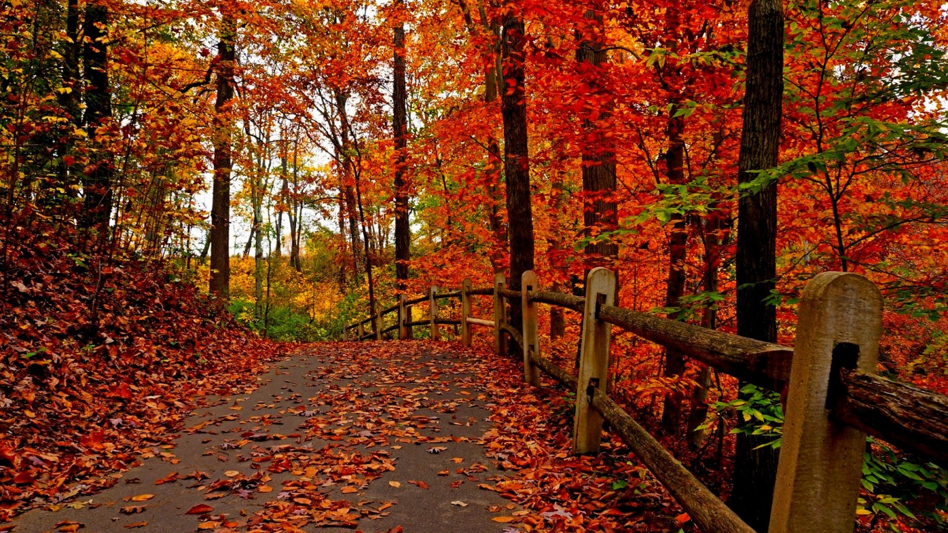 Download Wallpaper Forest Autumn Tree Road Park Leaves 1920x1080 With Red On Trees