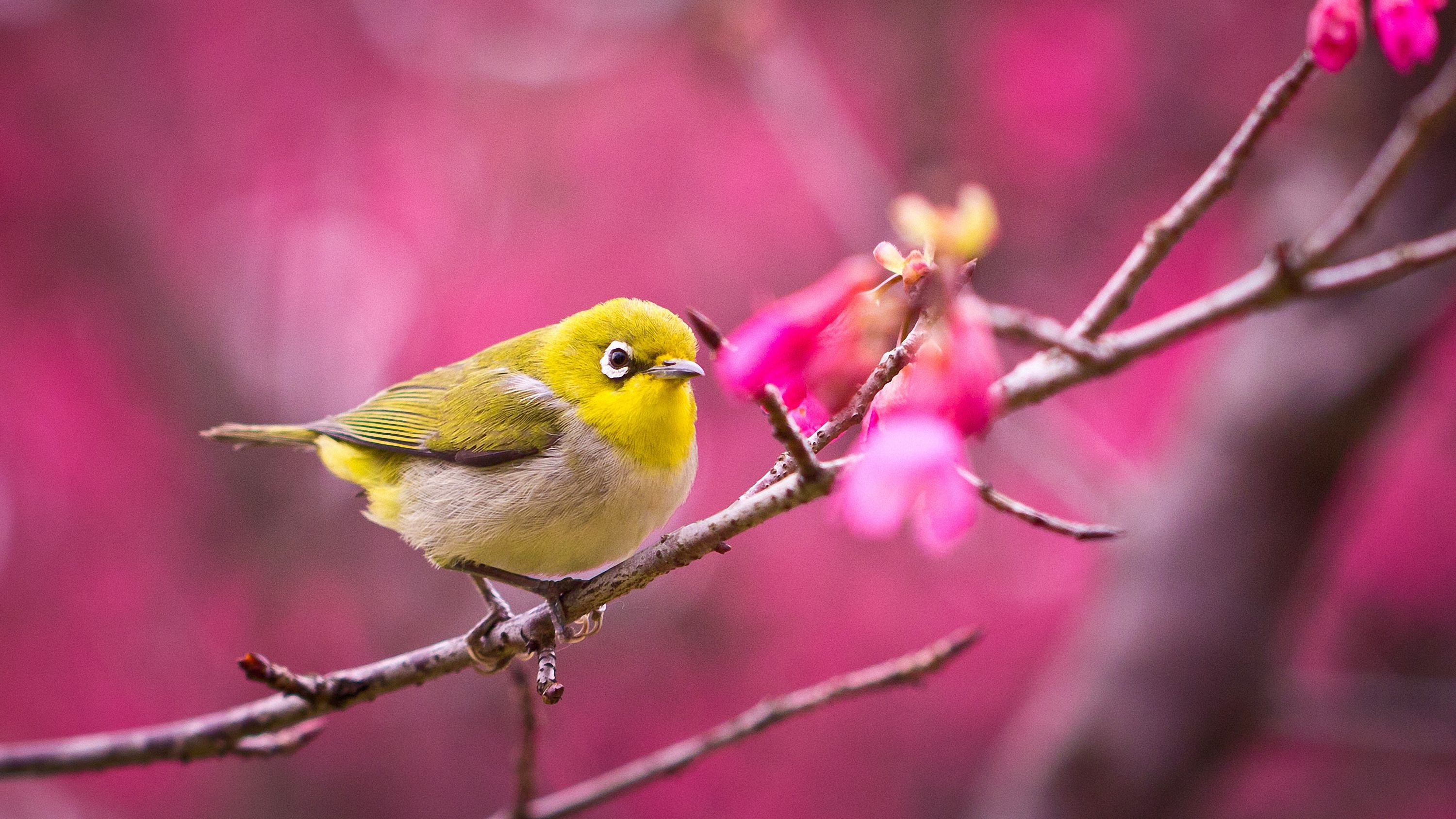 Cute bird wallpapers