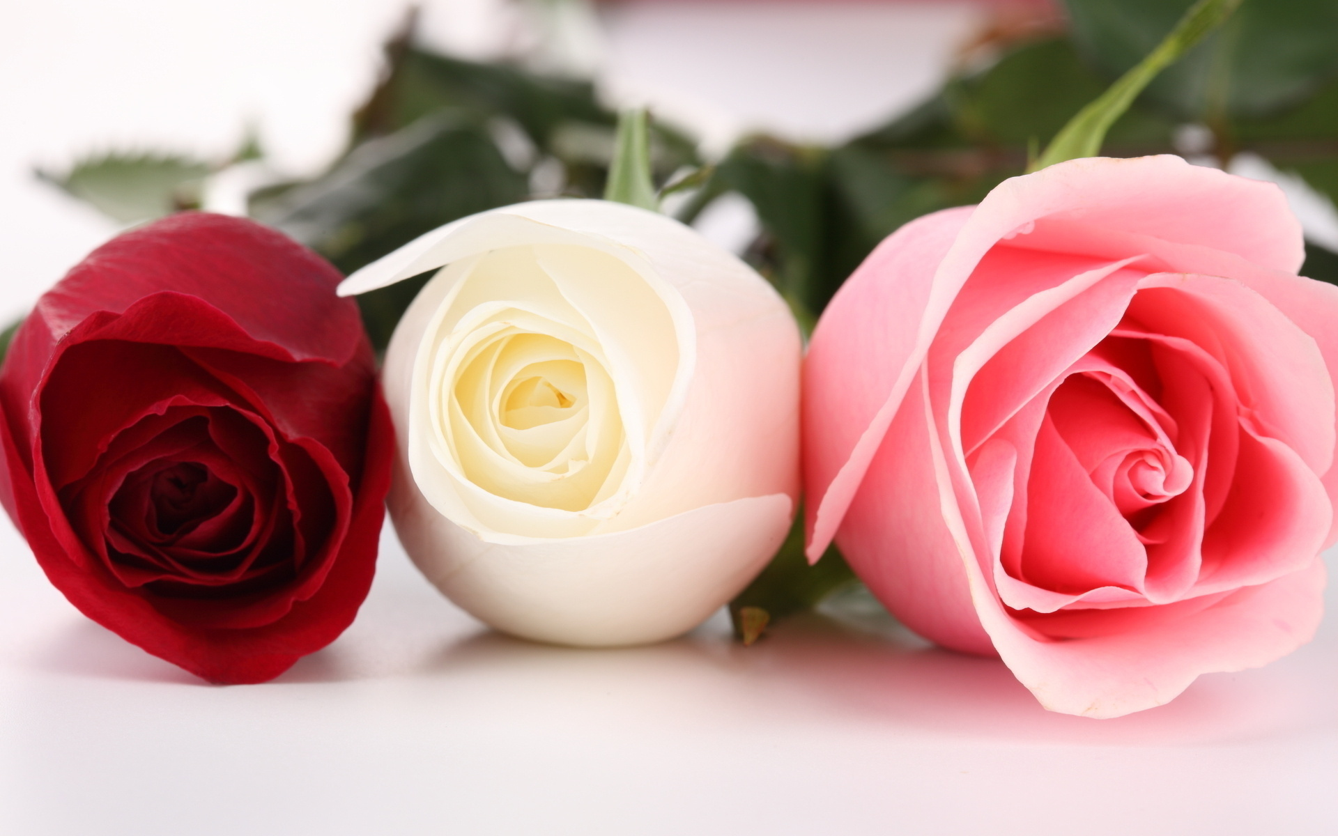 pictures of roses - HD1920×1200